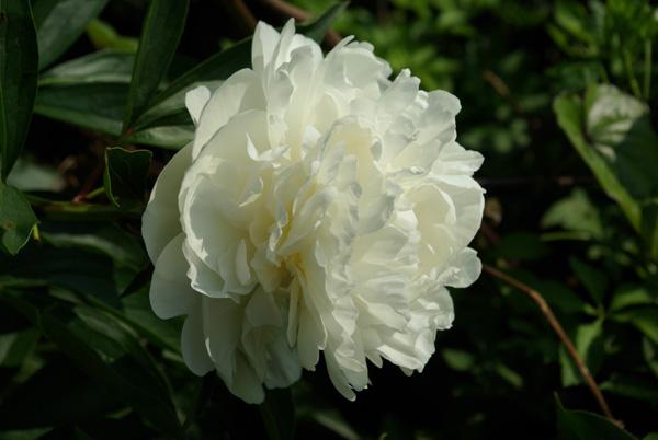 Flower_k10d