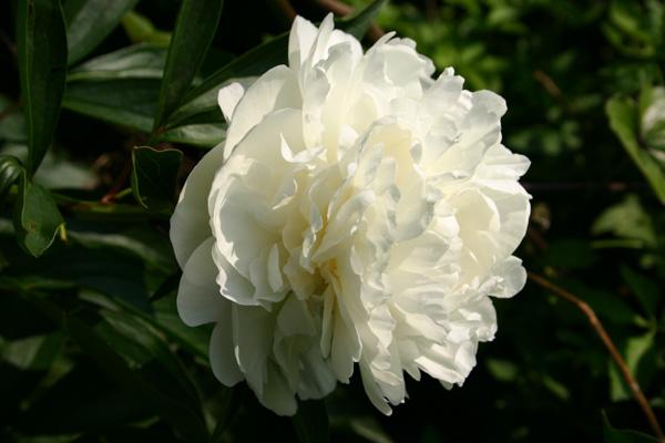 Flower_kissd