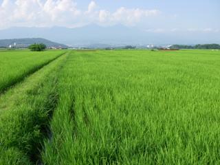 Hikarukaze