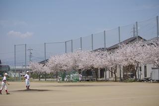 Sakuragrand