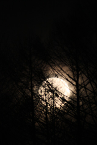 Bluemoon330_1