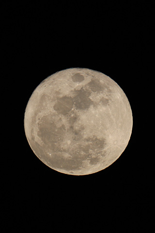 Bluemoon330_2
