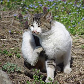 Anz_cat