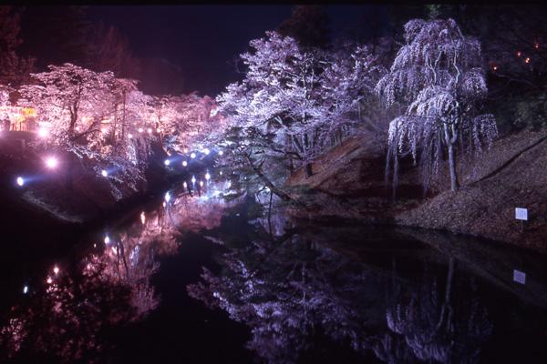 Sakura_ueda